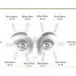 Mononeuropatía VI par craneal